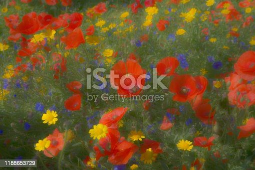 Beautiful array of wildflowers especially red poppies and cornflowers with yellow daisies. Heavily post processed to give a painterly surreal effect.