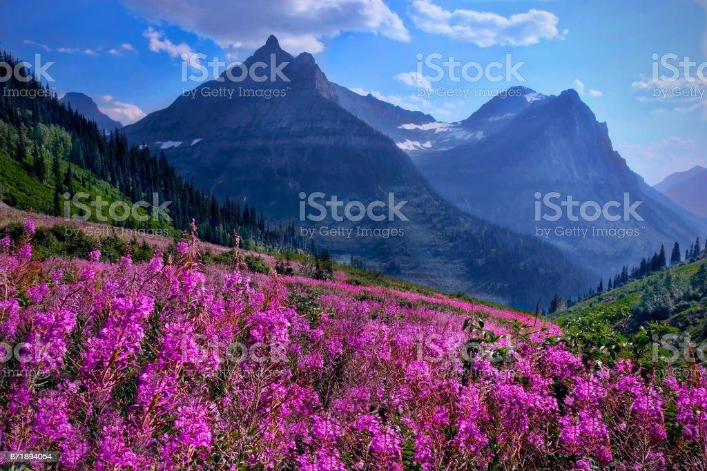 Wildblumen in Almwiesen und Rocky Mountains. – Foto