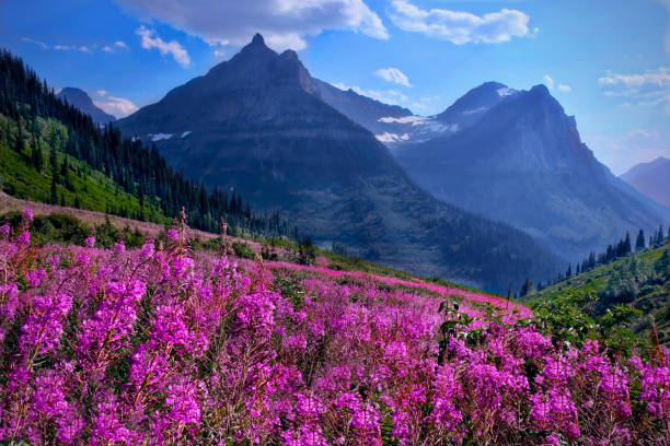 Wildblumen in Almwiesen und Rocky Mountains. – Foto