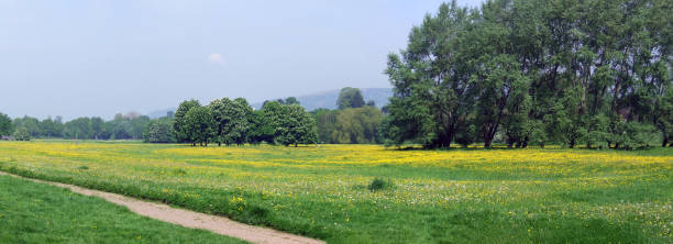 Wildflowers in bloom, Castle Meadows, Abergavenny, Monmouthshire, Wales stock photo