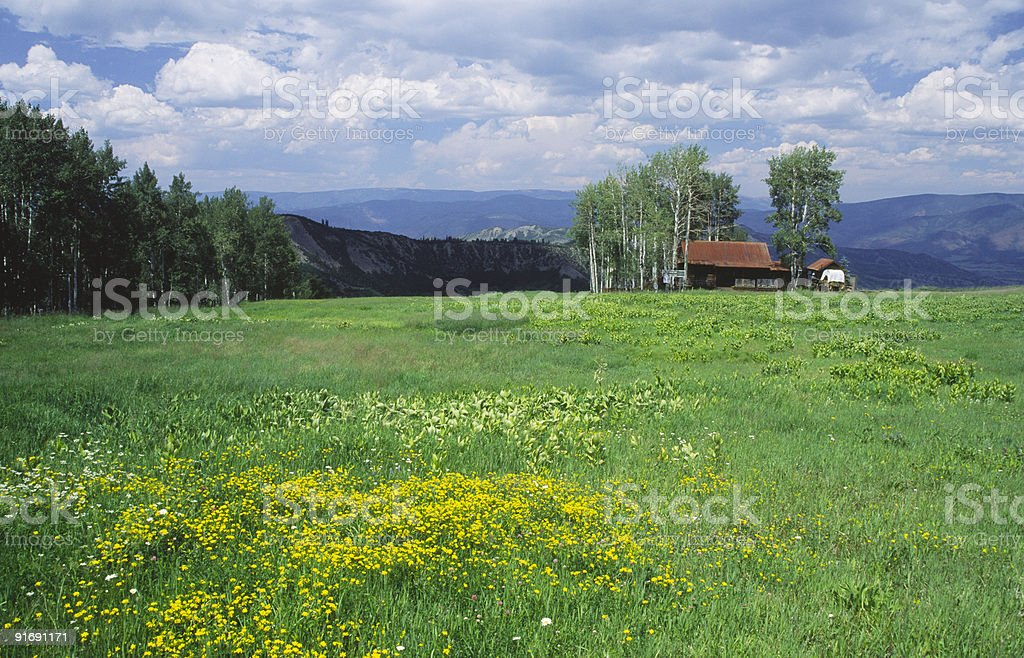 Wildflowers in Colorado Rocky Mountains royalty-free stock photo
