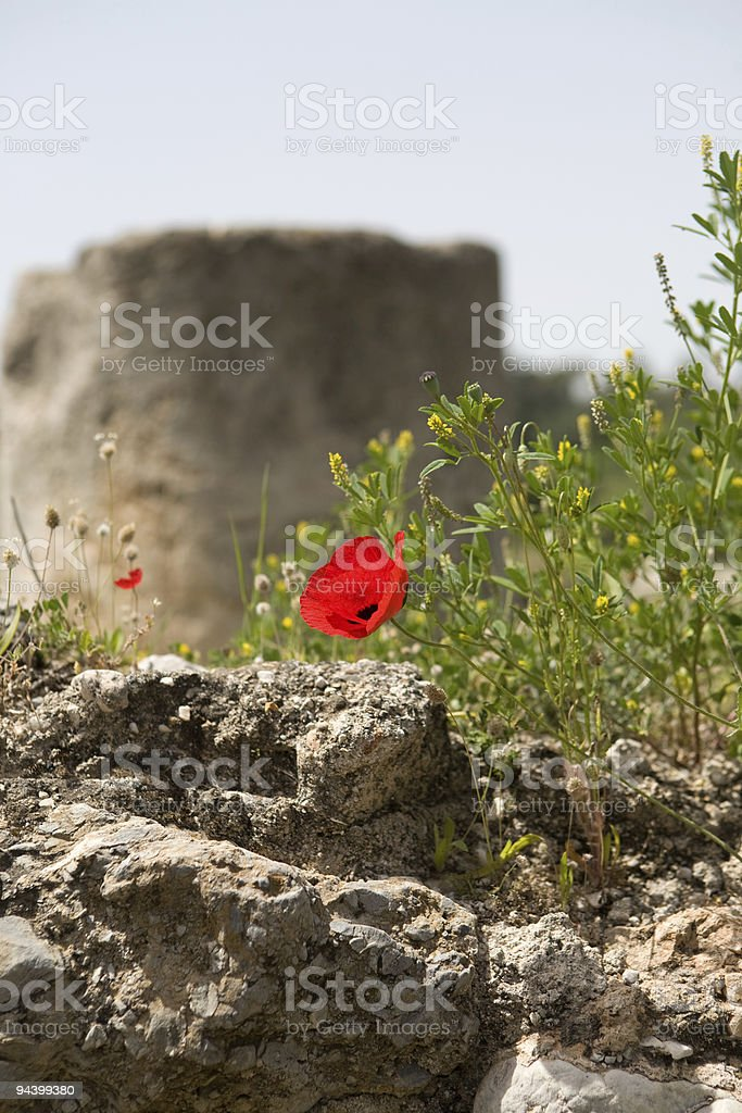 Wildflowers in Greece royalty-free stock photo