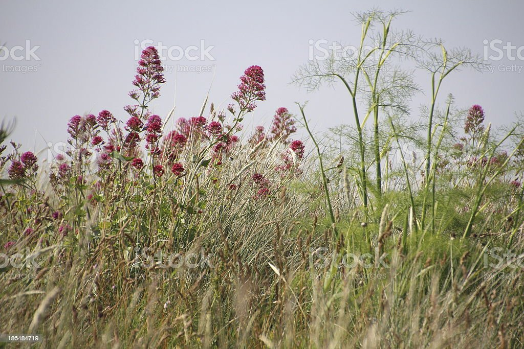 Wildflowers in Marshland stock photo