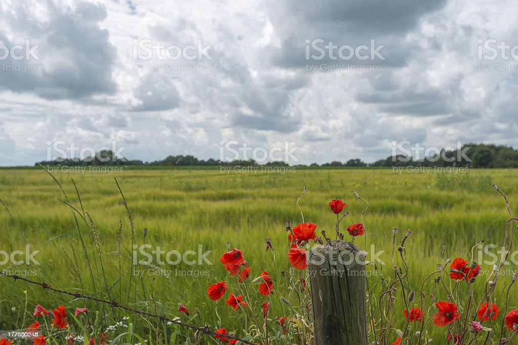 Wildflowers in summer stock photo