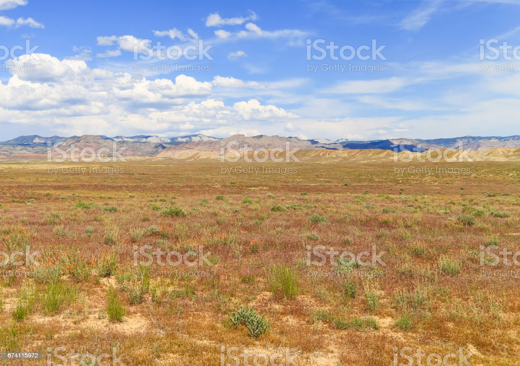 Wildflowers in the Desert royalty-free stock photo