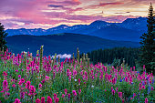 Wildflowers in the Gore Range - Scenic landscape with meadows of wildflowers including Indian Paintbrush, Lupine, Alpine Asters.  Landscape scenic photography series.  Colorado USA.