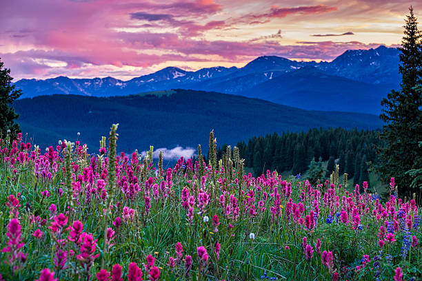 Wildflowers in the Gore Range Wildflowers in the Gore Range - Scenic landscape with meadows of wildflowers including Indian Paintbrush, Lupine, Alpine Asters.  Landscape scenic photography series.  Colorado USA. vail colorado stock pictures, royalty-free photos & images