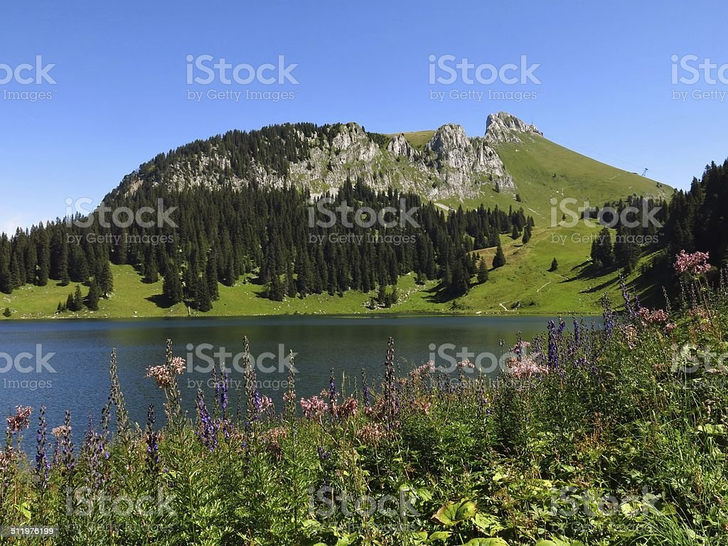 Wildflowers, lake Oberstockensee and Stockhorn stock photo