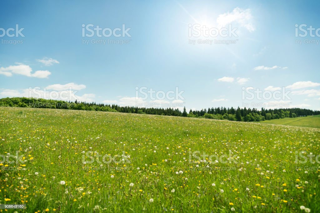 Wildflowers meadow under blue sky stock photo