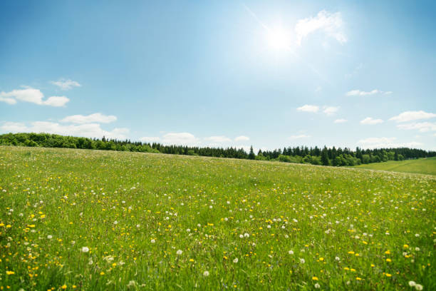 wildflowers meadow under blue sky - meadow stock pictures, royalty-free photos & images