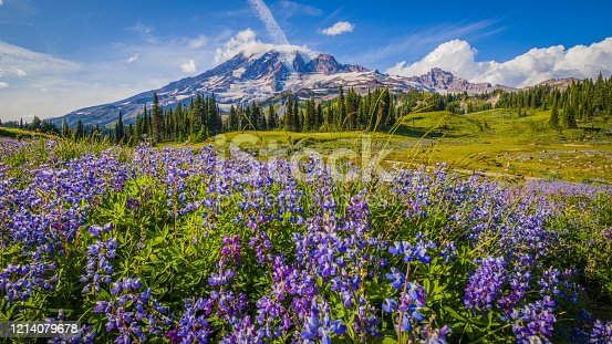 istock Wildflowers, Mount Rainier, Washington st 1214079678