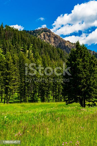 istock Wildflowers near Hebgen Lake, Montana 1269354572