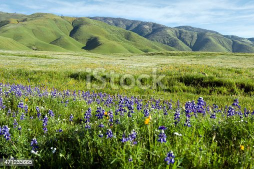 Spring Wildflowers on Southern California hillsides.