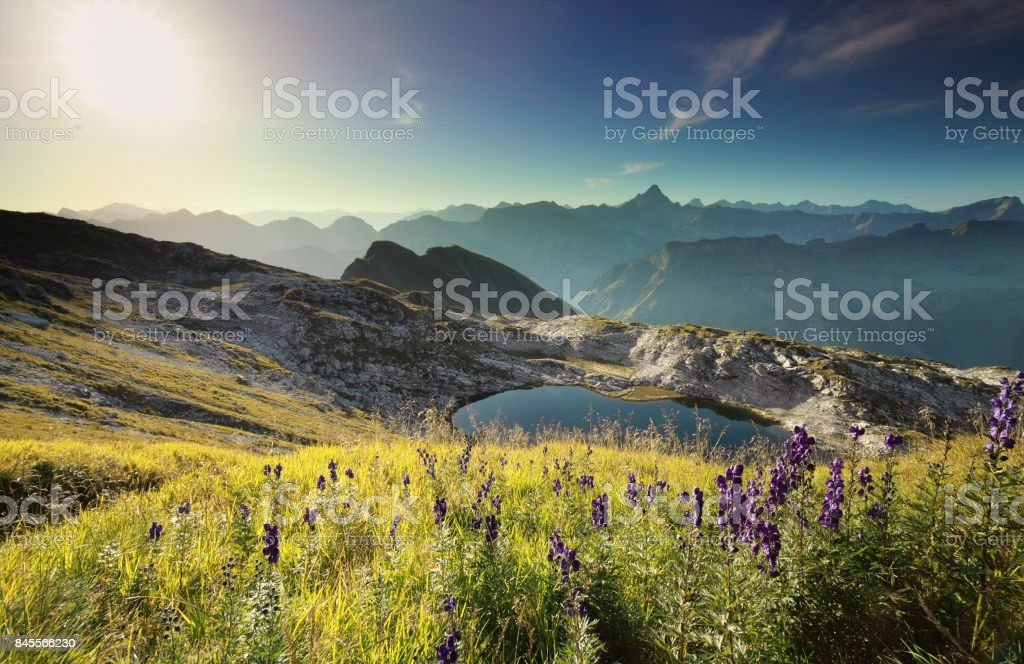 wildflowers on hill by alpine lake at sunrise, Germany stock photo