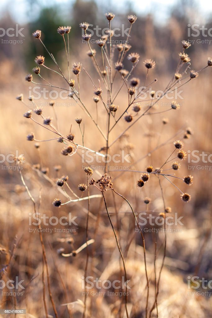 Wildflowers on meadow royalty-free stock photo