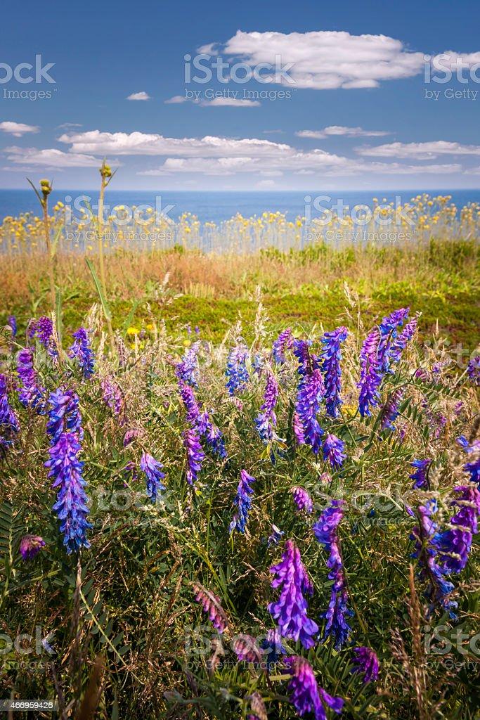 Wildflowers on Prince Edward Island stock photo