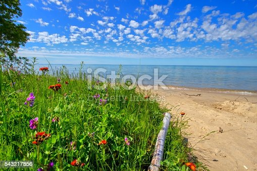 istock Wildflowers On The Beach 543217856