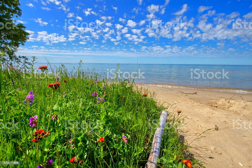 Wildflowers On The Beach stock photo