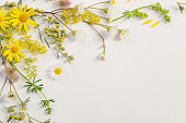 wildflowers on white paper background