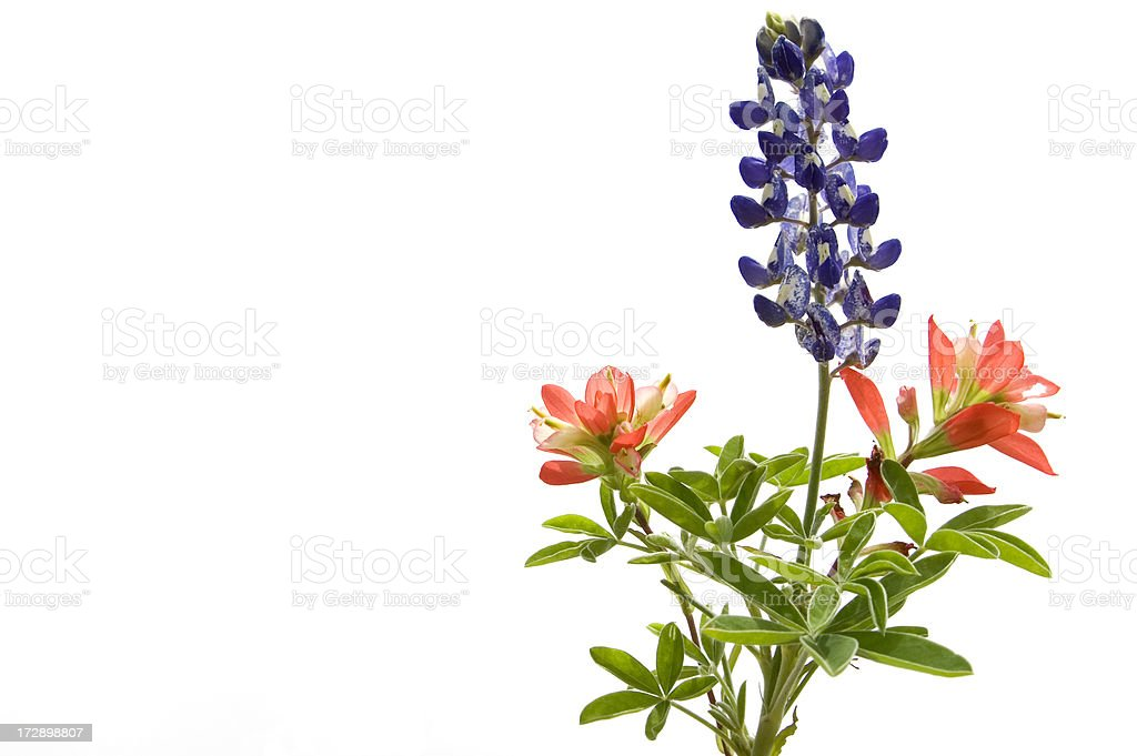 wildflowers on white stock photo