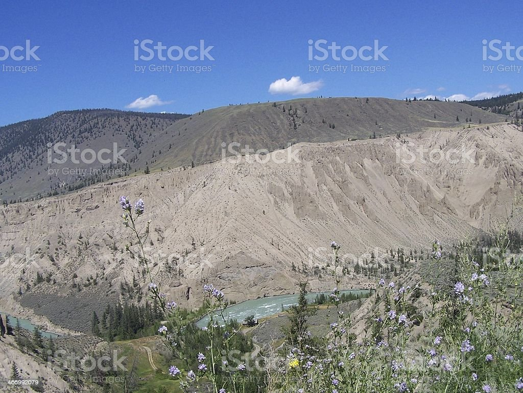 Wildflowers over the Chilcotin River scenic royalty-free stock photo