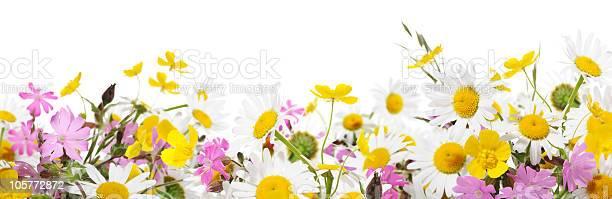 Wildflowers picture id105772872?b=1&k=6&m=105772872&s=612x612&h=fjanwqq7d7ikqbsv79bjlhg ikoabq0nv7ql ybna 8=