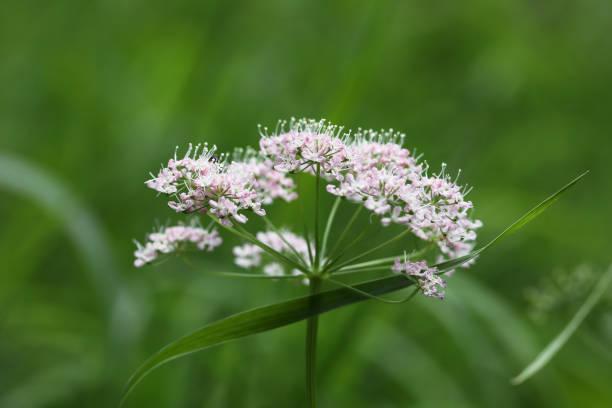 fiori - gigifoto foto e immagini stock