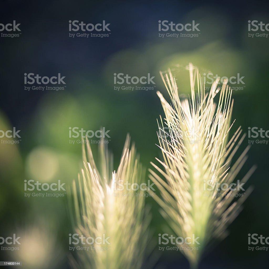 Wildflowers royalty-free stock photo