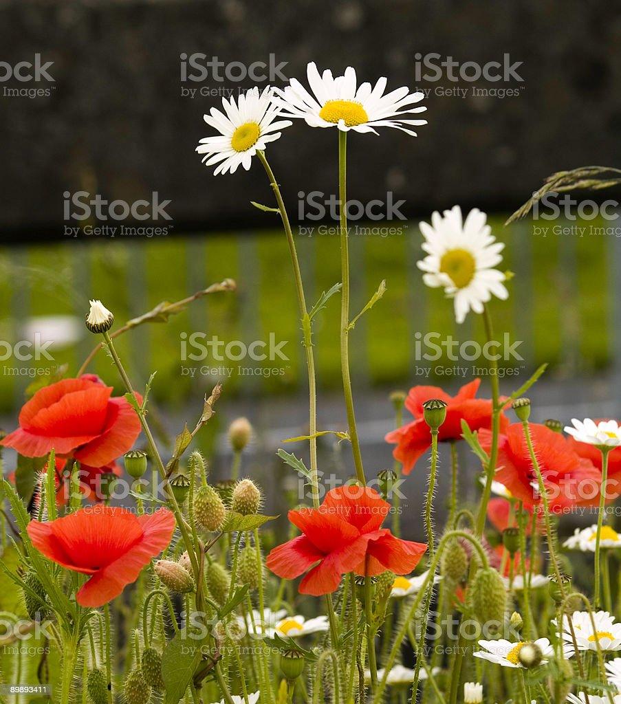 Wildblumen Lizenzfreies stock-foto