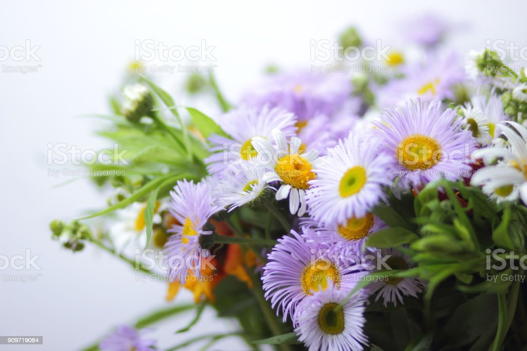 Wildflowers purple and white flowers in a bouquet a bouquet for a wildflowers purple and white flowers in a bouquet a bouquet for a gift mightylinksfo