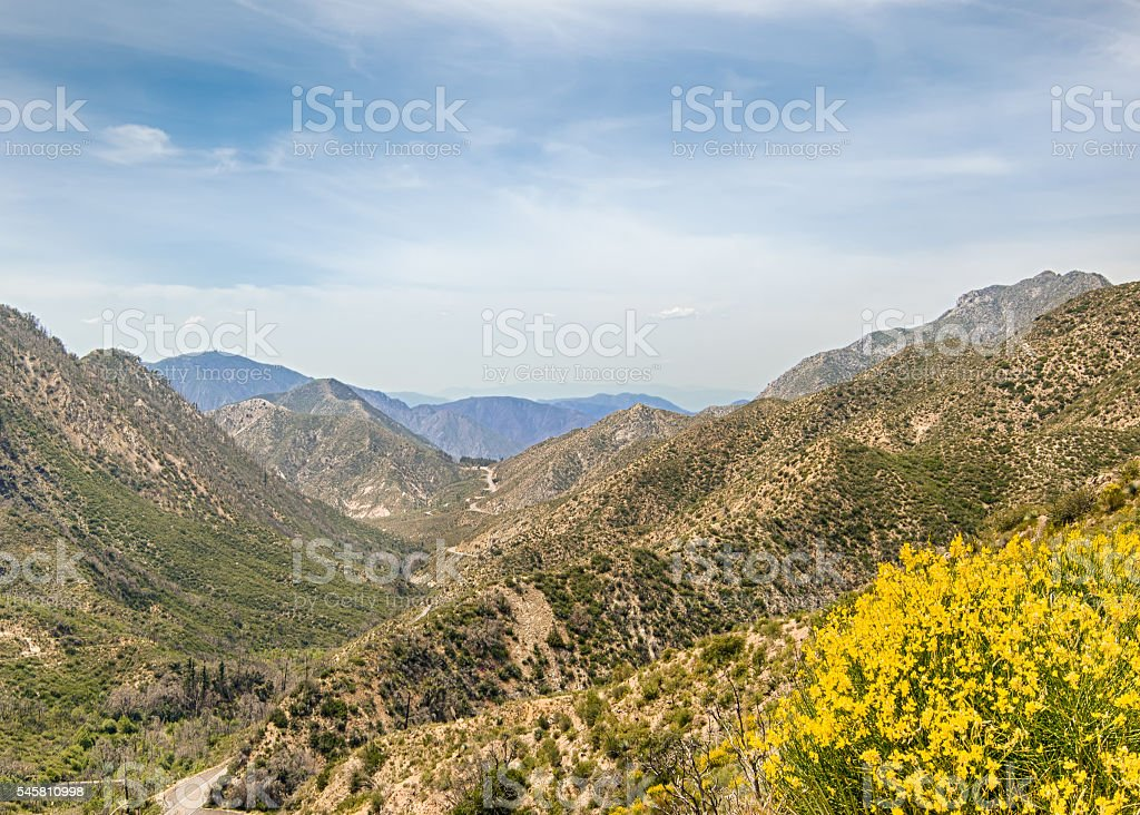 Wildflowers, San Gabriel Mountains, Angeles National Forest, CA stock photo