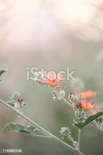 Vertical image of orange flowers in Arizona in the sun