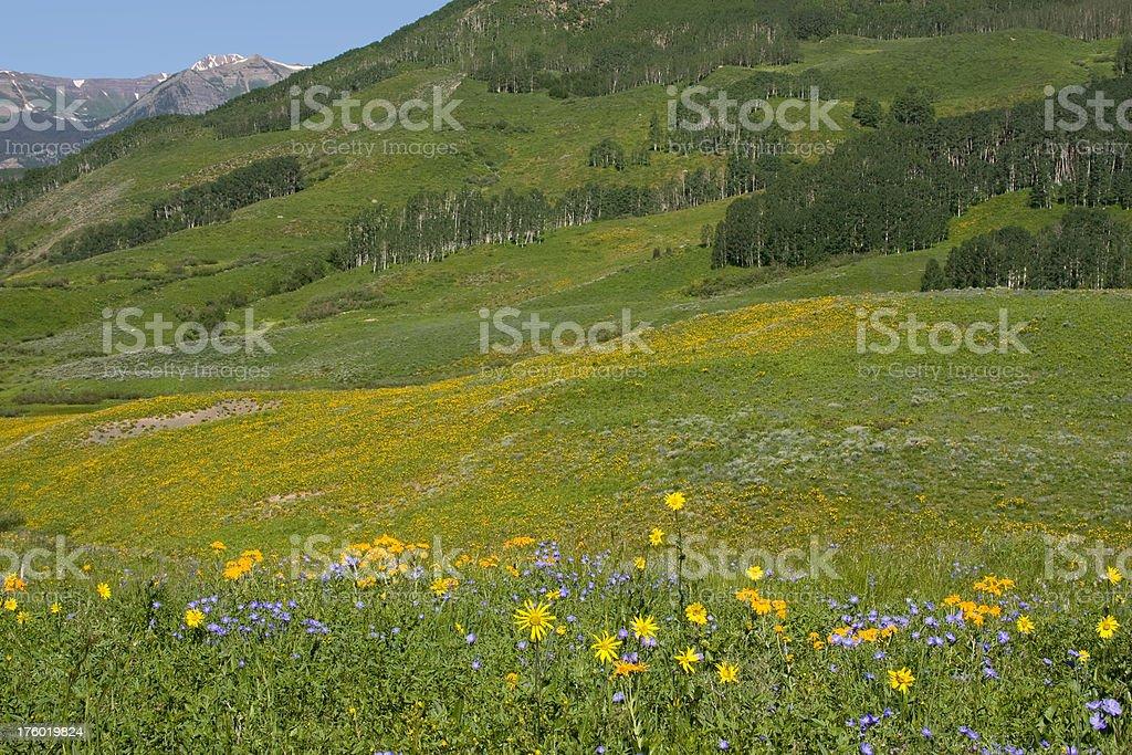 Wildflowers & The Rockies stock photo