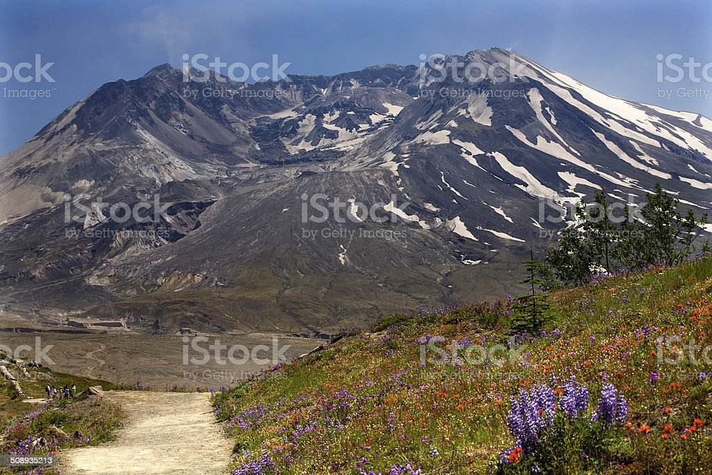 Wildflowers Trail Mount Saint Helens National Park Washington stock photo
