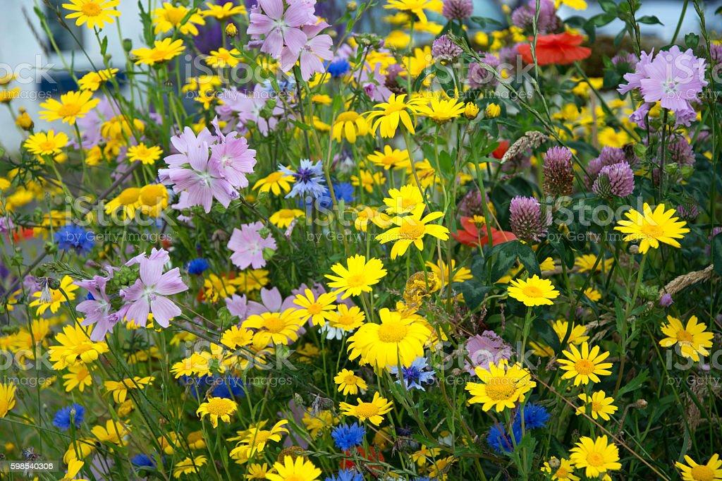 Wildflowers up close photo libre de droits