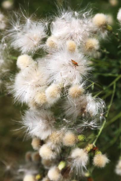 fiori di campo, wildflowers - gigifoto foto e immagini stock