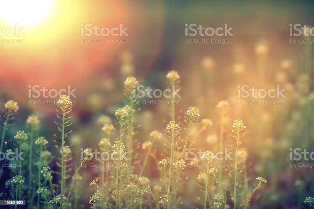 Wildflowers-XXXL royalty-free stock photo