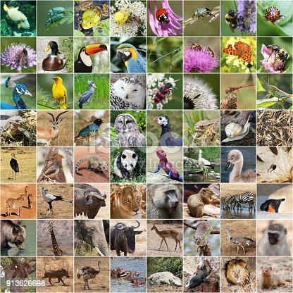 istock Wildlife collage 913626698