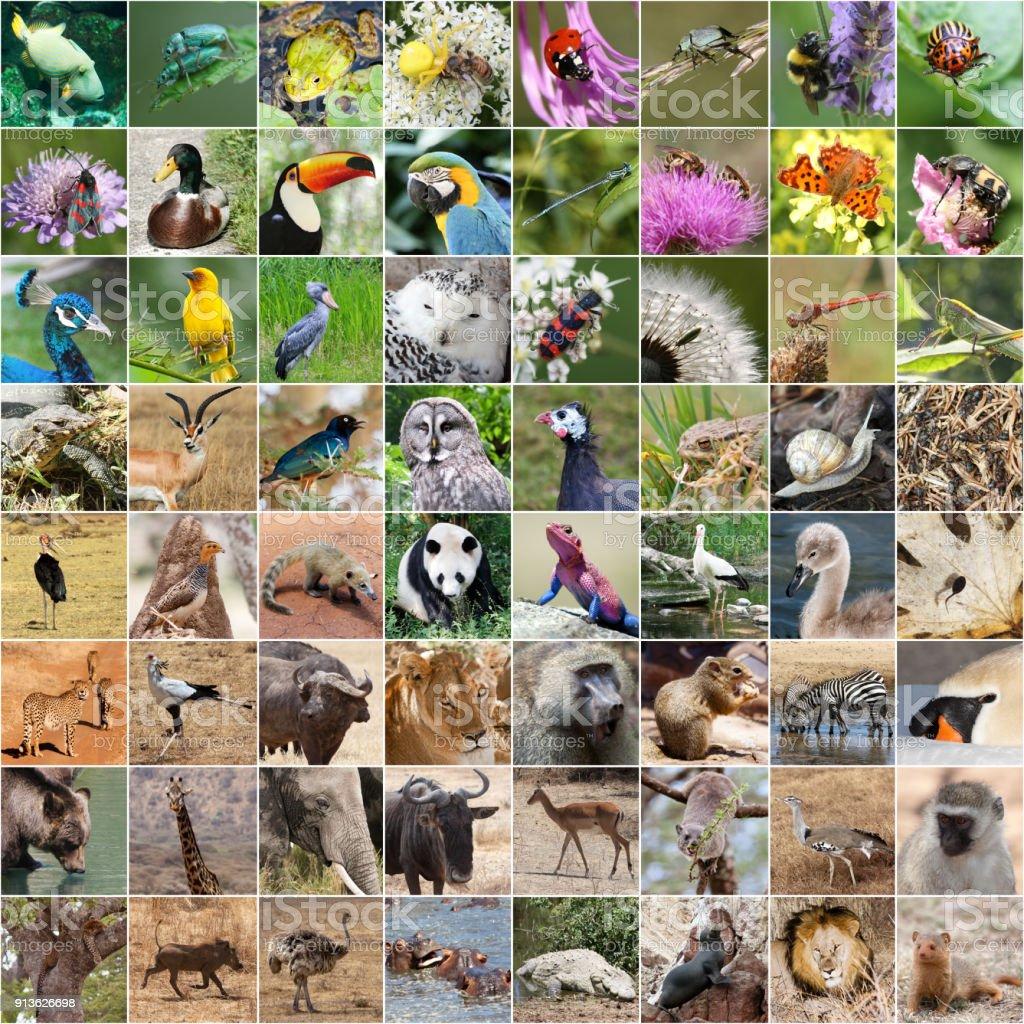 Collage de la vida silvestre - foto de stock
