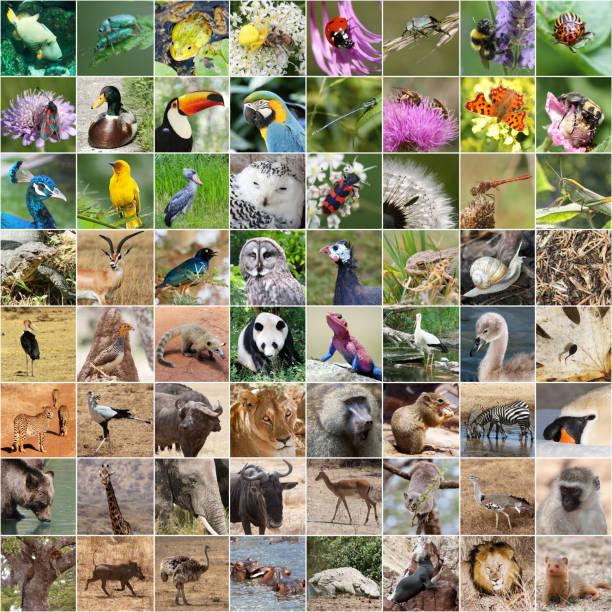 tierwelt-collage - seltene pflanzen stock-fotos und bilder