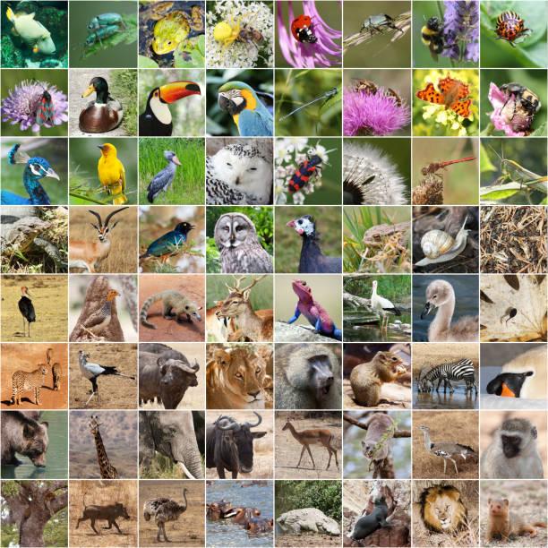 Wildlife collage picture id913630794?b=1&k=6&m=913630794&s=612x612&w=0&h=rh2qhetu5delyk5qazhvog hpvtljlsxoy6352qcntc=