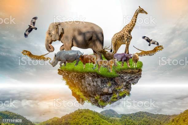 Wildlife conservation day wild animals to the home or wildlife picture id1171141823?b=1&k=6&m=1171141823&s=612x612&h=7 vqsohmtiwimrwiuclcqew0bwrcqre90ialiskz uw=