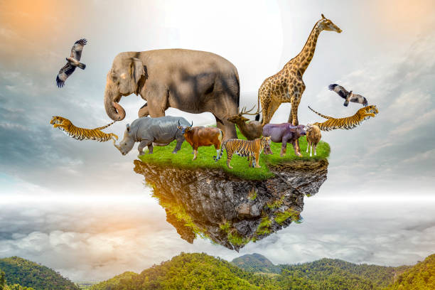 Wildlife conservation day wild animals to the home or wildlife picture id1171141823?b=1&k=6&m=1171141823&s=612x612&w=0&h=e w0fygs0vrzwtesgatf4ewegn1dyzpowbz3mnqecgi=