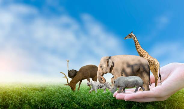 Wildlife conservation day wild animals to the home or wildlife picture id1198393776?b=1&k=6&m=1198393776&s=612x612&w=0&h=iqfkt0ouyfqg4u0tnbp soj4ijtzzc0o n1j8q2se1q=