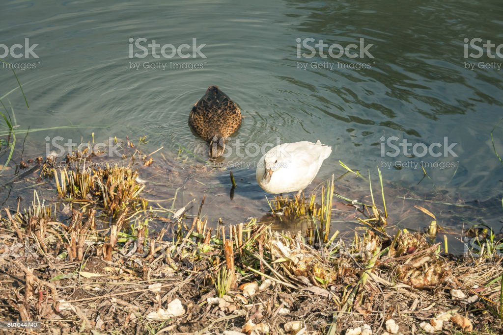 wildlife in Champagne countryside stock photo