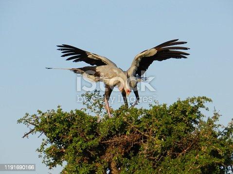 182061384 istock photo Wildlife in Masai Mara National Park 1191690166