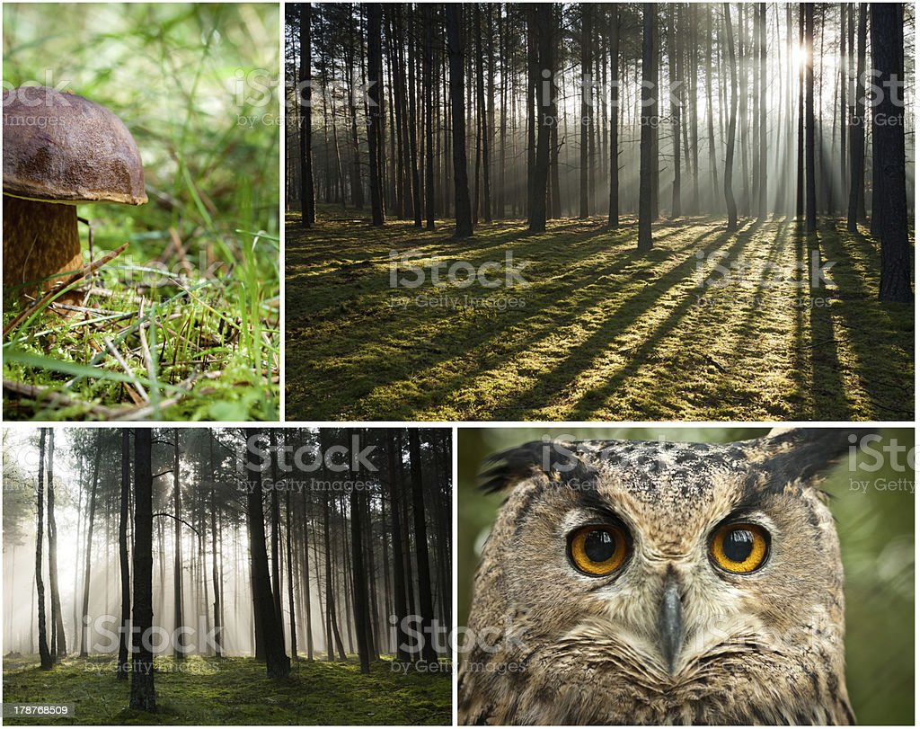 Wildlife in the forest at dawn royalty-free stock photo