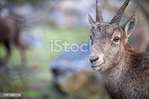 istock Wildlife in the isselburg Natural Biotope Park 1297390129