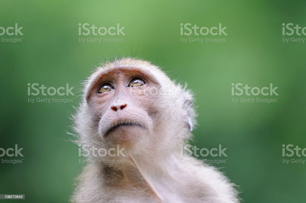 Wildlife Monkey Portrait - Khao Sak National Park​​​ foto