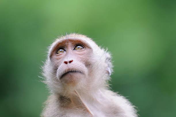 scimmia di ritratto-parco nazionale khao sak - macaco foto e immagini stock